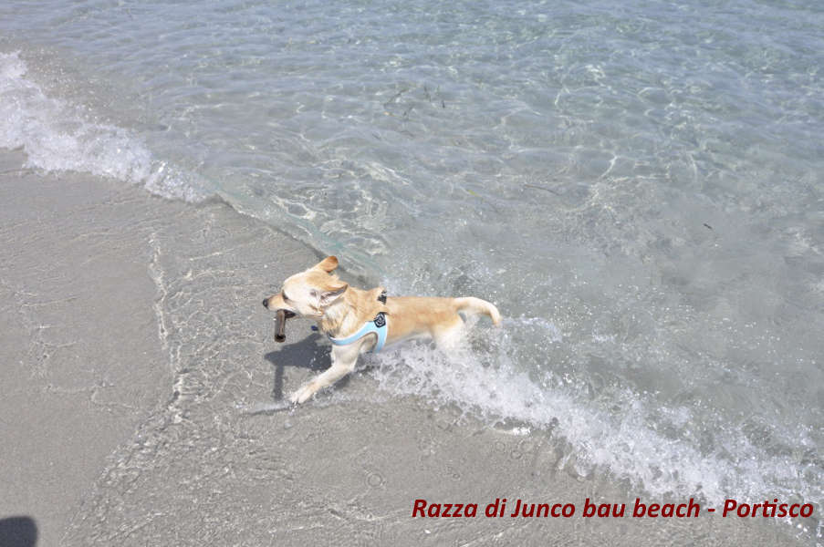 Razza di junco bau beach