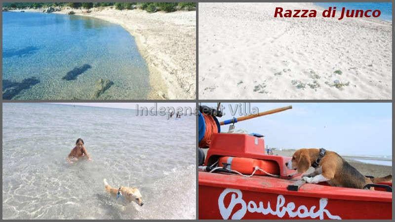 31 Razza di Junco beach Bau beach