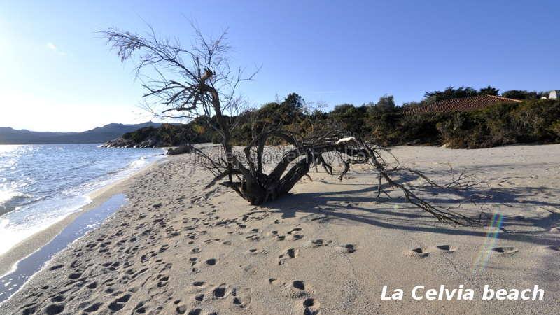 38-spiaggia-la-celvia