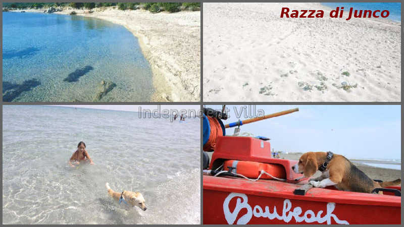 46-razza-di-junco-beach-bau-beach
