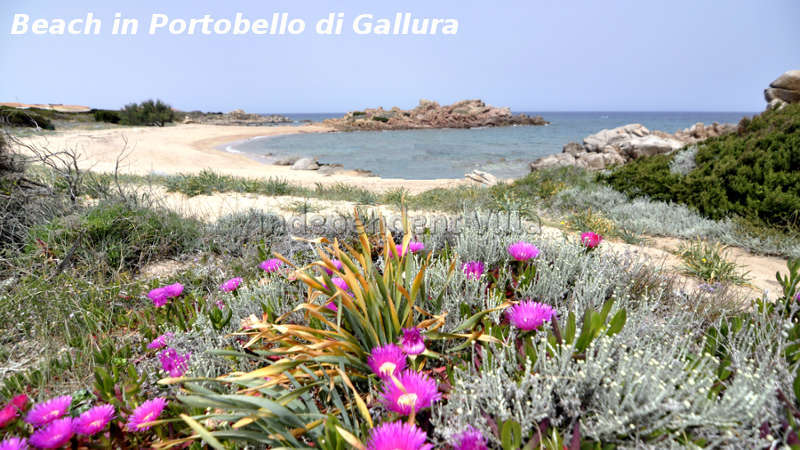 76-beach-in-portobello