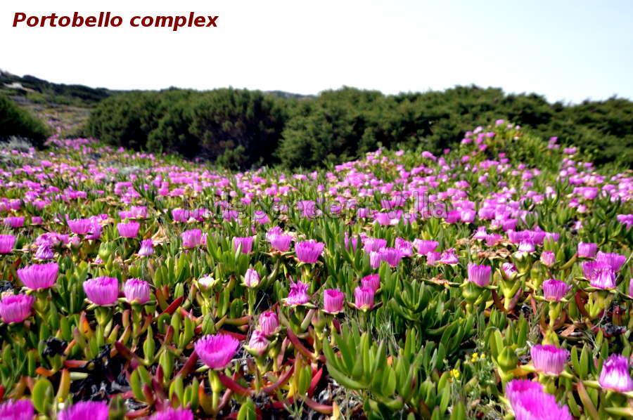 81-nature-in-portobello