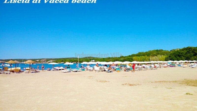 Villa Prince lux  TERRITORY-LISCIA DI VACCA - 6