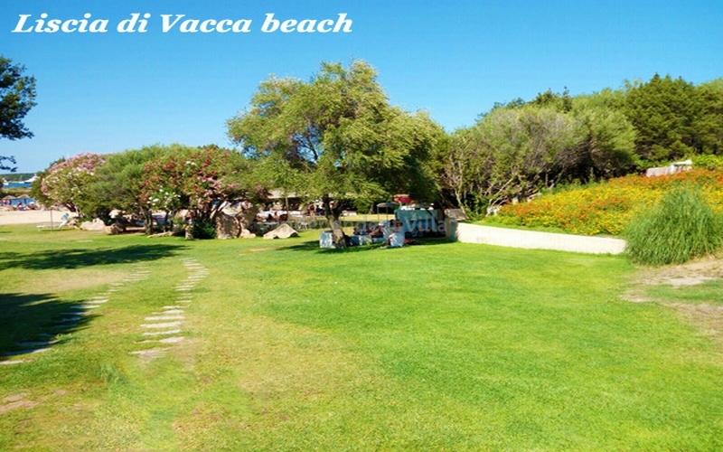 Villa Prince lux TERRITORY-LISCIA DI VACCA - 4