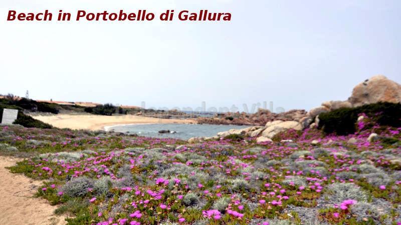 105 - Beach in Portobello